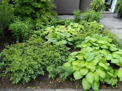 New Greektown Toronto perennial garden by garden muses-not another Toronto gardening blog