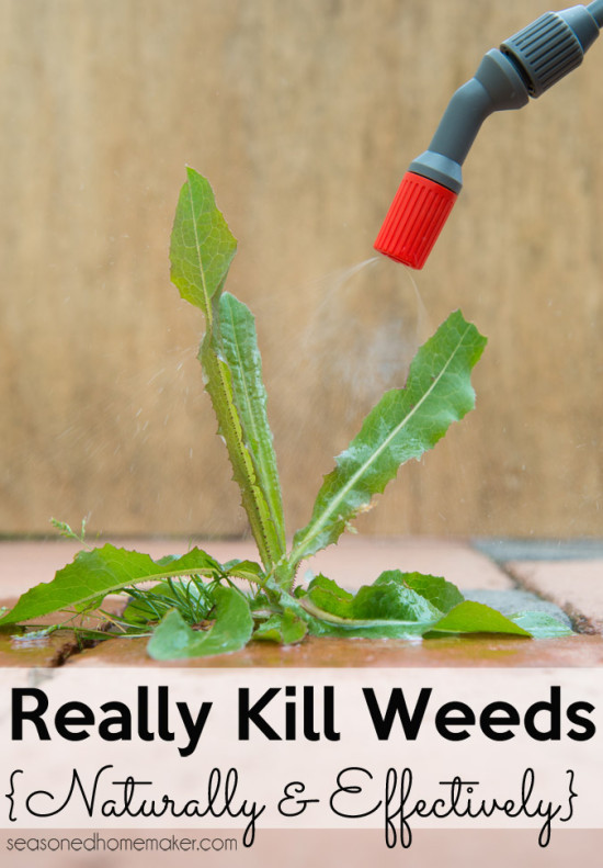 Ways to kill weeds using household ingredients gardening my favorite things - Get rid weeds using vinegar ...