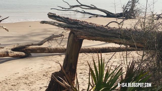 Driftwood, Beach, Jacksonville