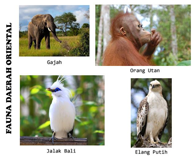 Fauna Oriental