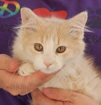 Nevada Spca Animal Rescue