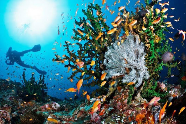 Spot diving di Pulau Ambon