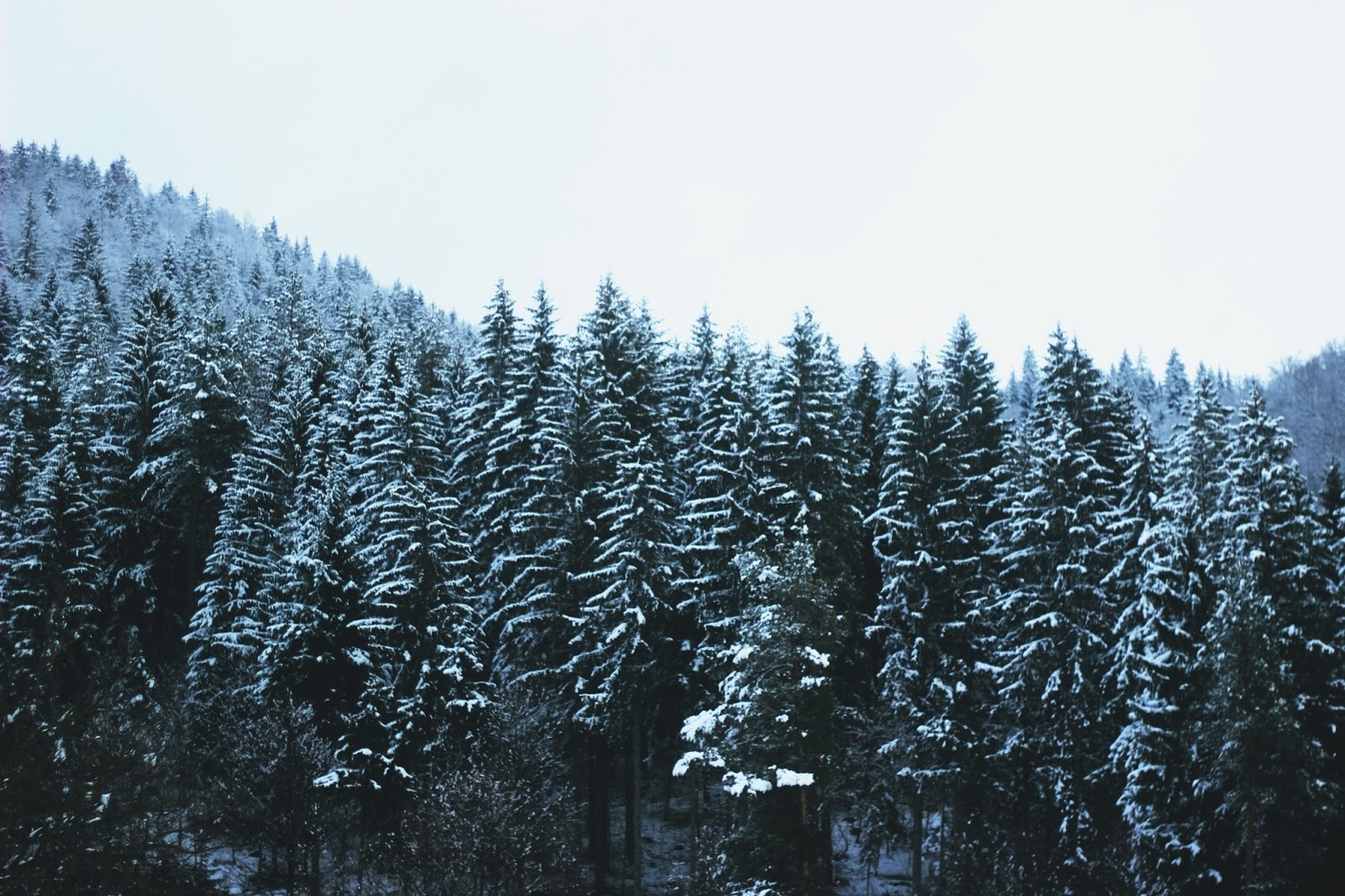 filipa canic blog, youarethepoet, you are the poet blog, winter, forest,