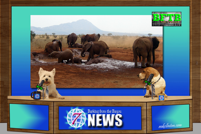 BFTB NETWoof News report on elephants in Vietnam