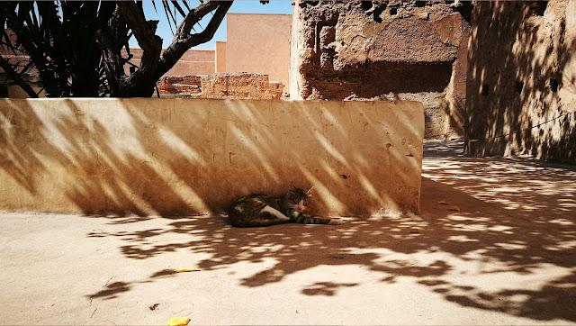 Kot wylegujący się w cieniu w Pałacu El-Badi, Marakesz, Maroko