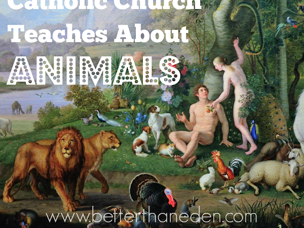 What Catholics Believe About Animals