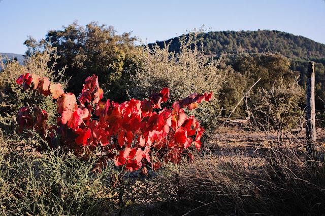 Cepa en otoño