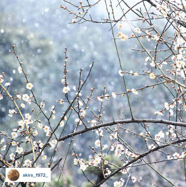 akira_1972 - Ehime Japan