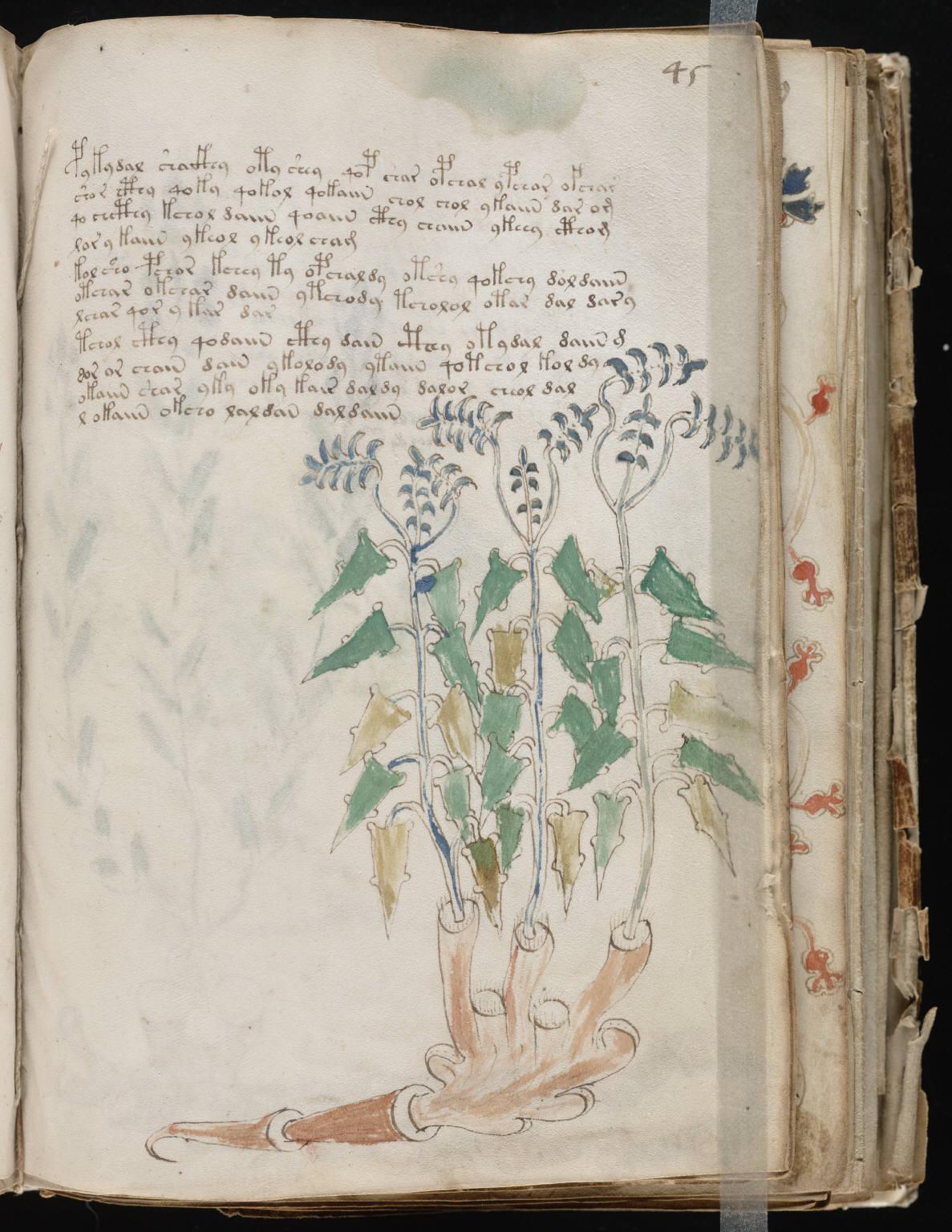 manuscrito087