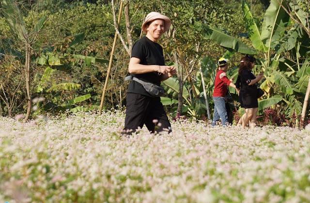 Ninh Binh brightened with buckwheat flowers blooming 6
