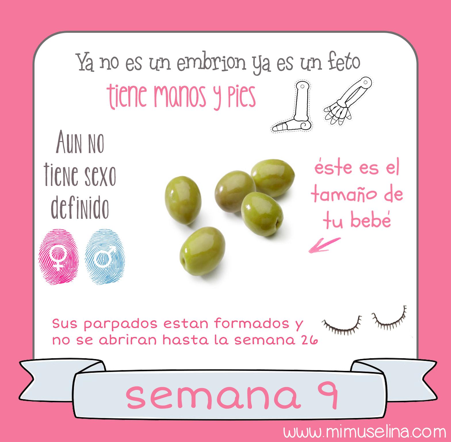 Desarrollo del bebe a las 9 semanas de gestacion
