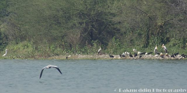 Bird watching at Pashan Lake, Pune, Maharashtra, India