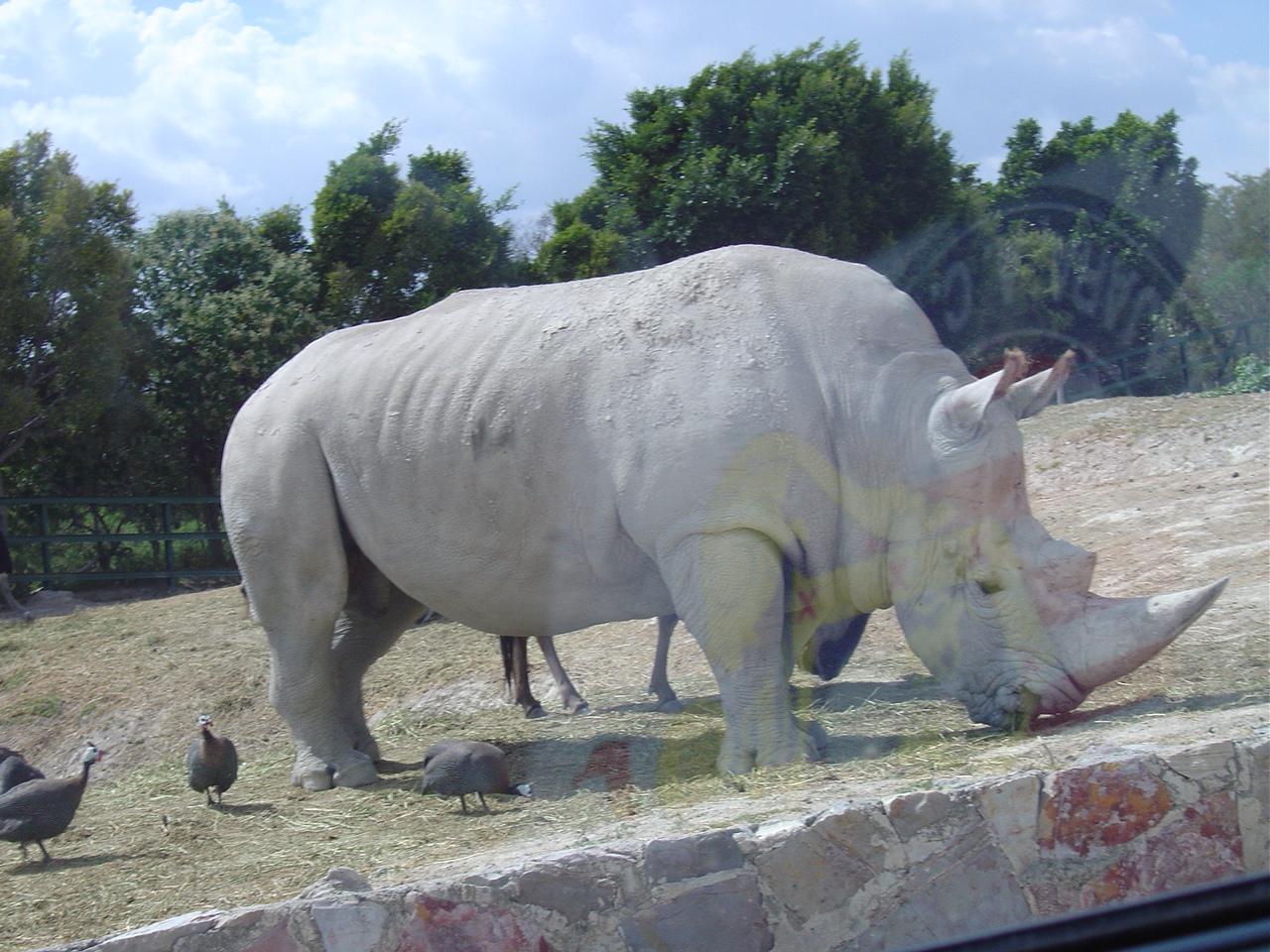 animales terrestres - photo #10