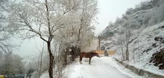 Με το πρώτο χιόνι ξύπνησαν οι κάτοικοι στα Τρίκαλα - «Το έστρωσε» για τα καλά το βράδυ