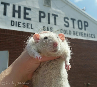 Oliver at a pit stop