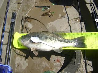 Kevin McCullough Kayak Bass Fishing