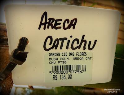 Quanto custa areca-catechu, palmeira-betel, noz-de-betel