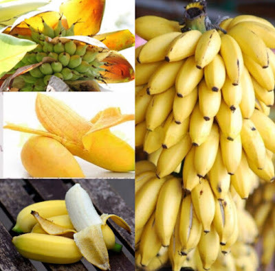 https://www.banggood.com/Egrow-30-Pcs-Dwarf-Banana-Seeds-Bonsai-Tree-Tropical-Fruit-Seeds-Balcony-Flower-for-Home-Plants-p-1259529.html?VU10125254322014040A