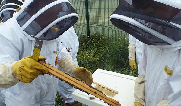 Αξίζει να ασχοληθώ με τη μελισσοκομία; Πόσο μέλι βγάζει μια κυψέλη; Η ομιλία της Σοφίας Γούναρη!