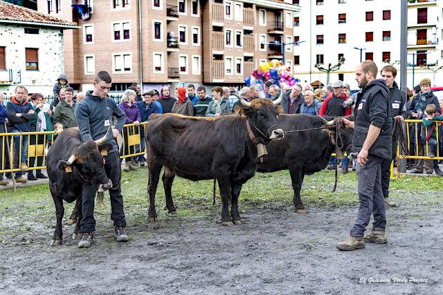 Orozko, Feria de Santa Lucía, exposición de ganado, por El Guisante Verde Project