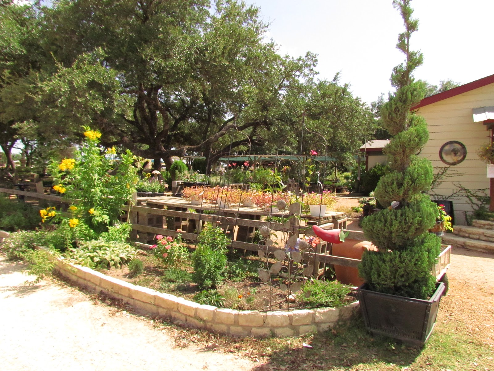 bwisegardening: Austin City Limits and Beyond!