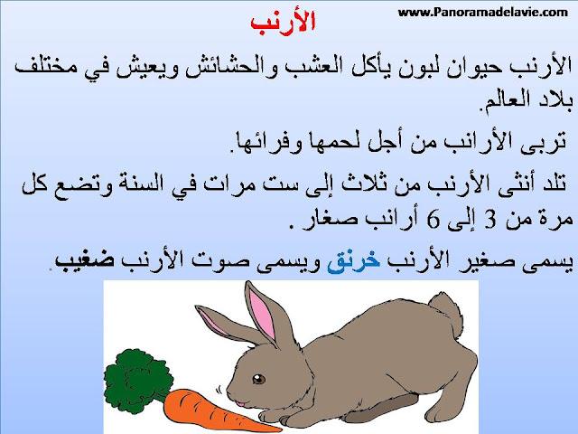 الأرنب