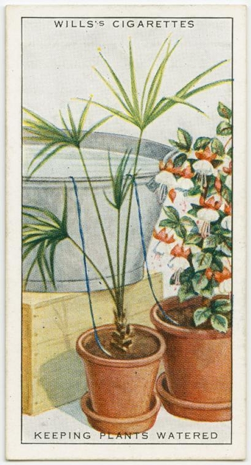 06-How-to-Keep-plants-watered-Gallaher-How-to-do-Cards-from-the-Early-1900-www-designstack-co