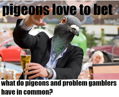Pigeons love to bet on the lottery