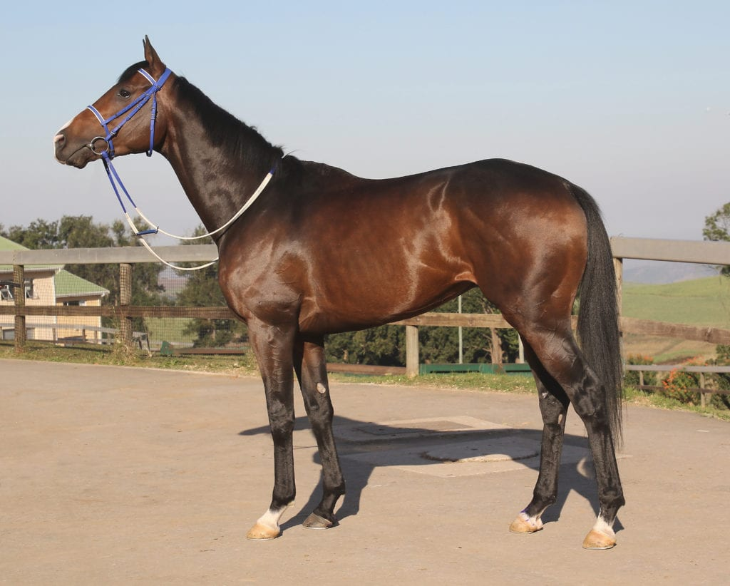 Tilbury Fort - Horse Profile - Breeder: Mr G J Armitage - Sire: Horse Chestnut - Dam: Colleen by Restructure (IRE)