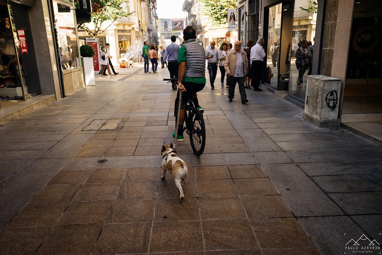 Ciclista a passear cão na Rua do Souto em Braga