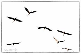 Darucsapat szanaszét repül fehér háttér előtt