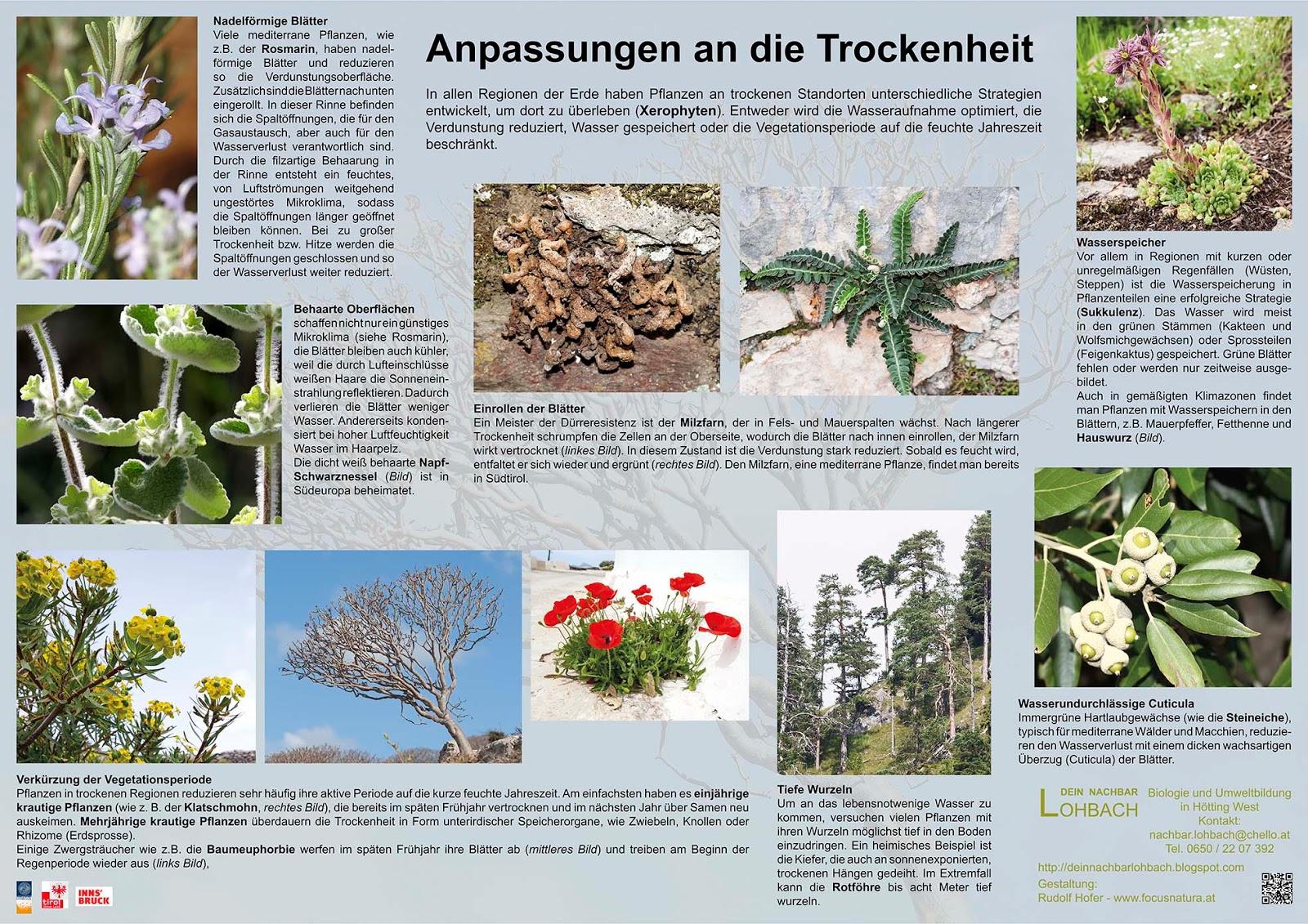 Nett Kiefer Geschlossen Haben Fotos - Der Schaltplan - triangre.info