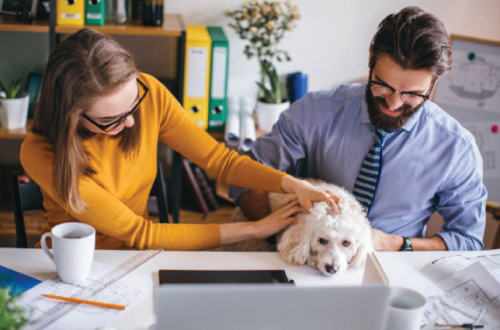 man and woman petting dog at desk