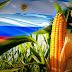México dejaría de comprar maíz a Estados Unidos y comenzaría a adquirirlo en Argentina