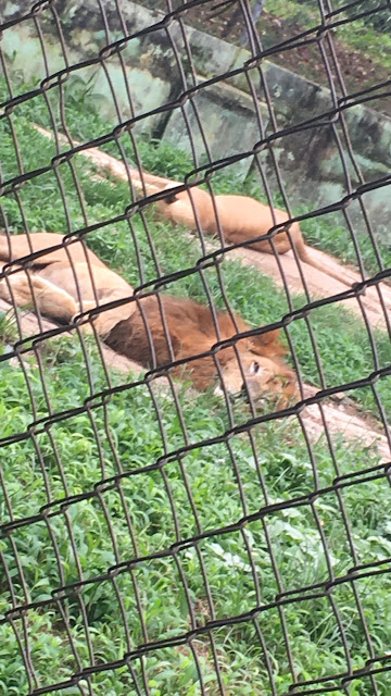 agodi zoo