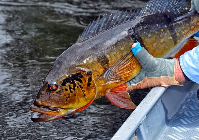 ONE DAY IN THE AMAZON RIVER BASIN   Amazon River Fishing