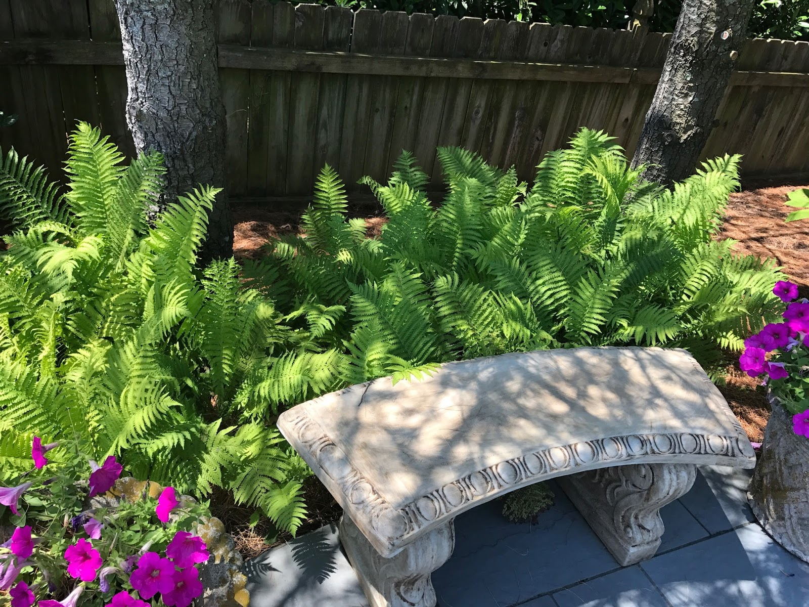 Stone bench and ferns