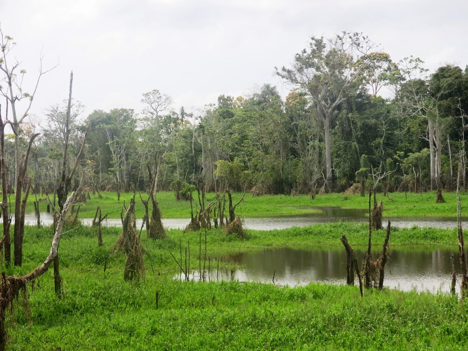 Igarapé do Rio Amazonas, nas proximidades de Manaus