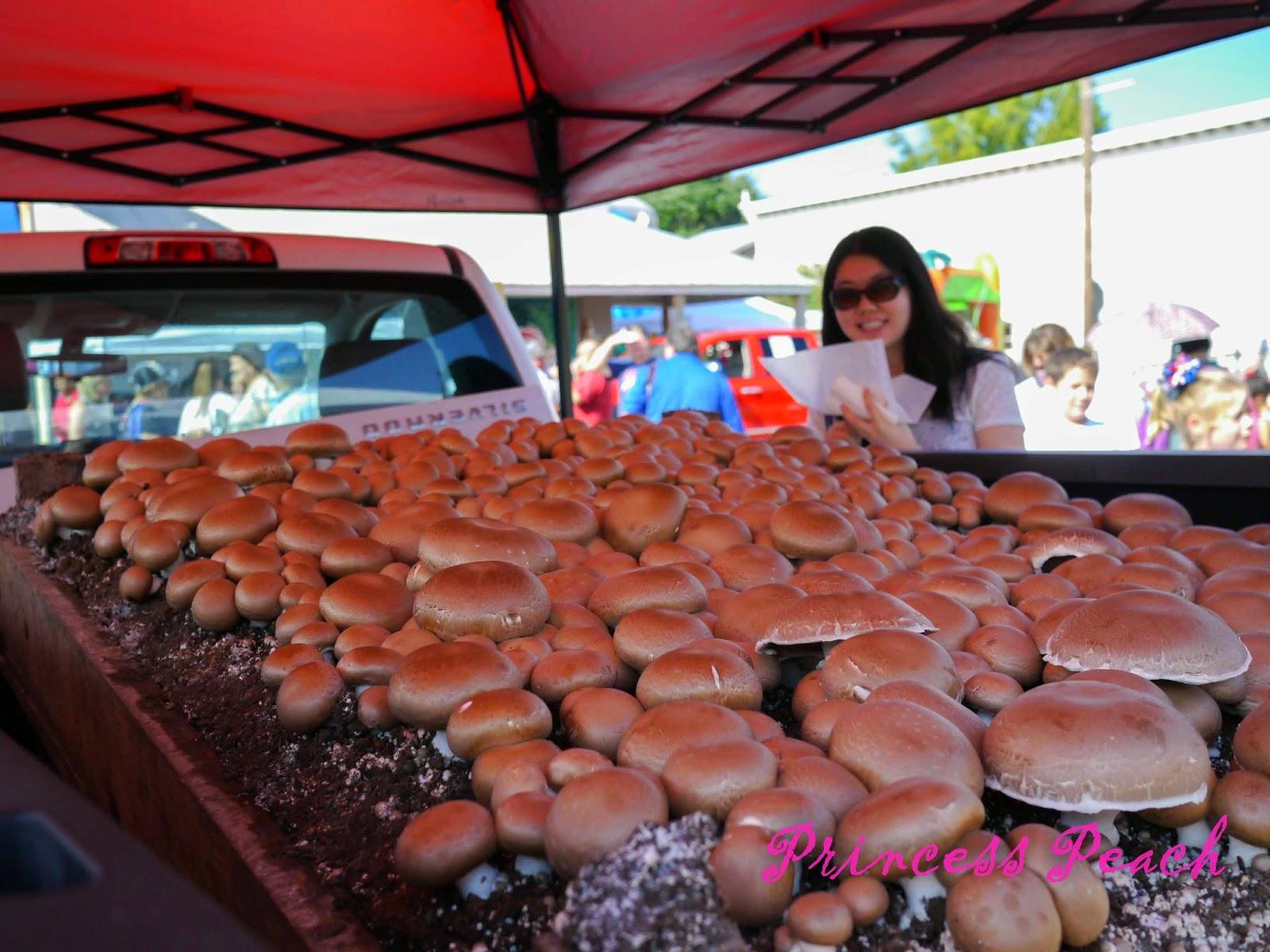 德州蘑菇節