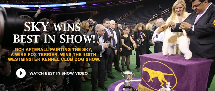 The Most Prestigious Dog Show In the United States