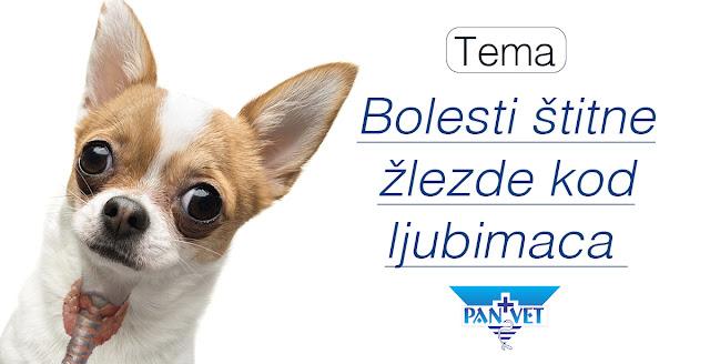 Bolesti štitne žlezde kod pasa i mačaka Panvet Subotica