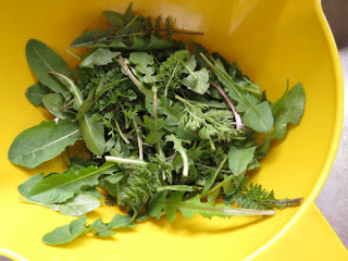 wild spring greens for salad