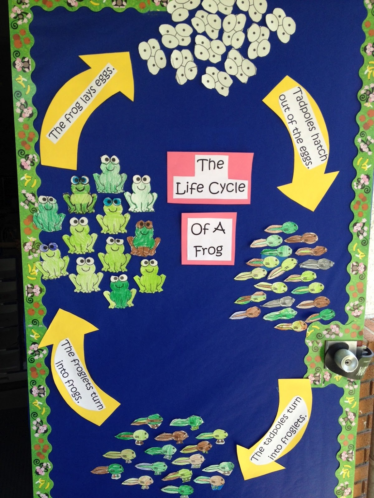 Life Cycle Of A Frog And Adorable Frog Book