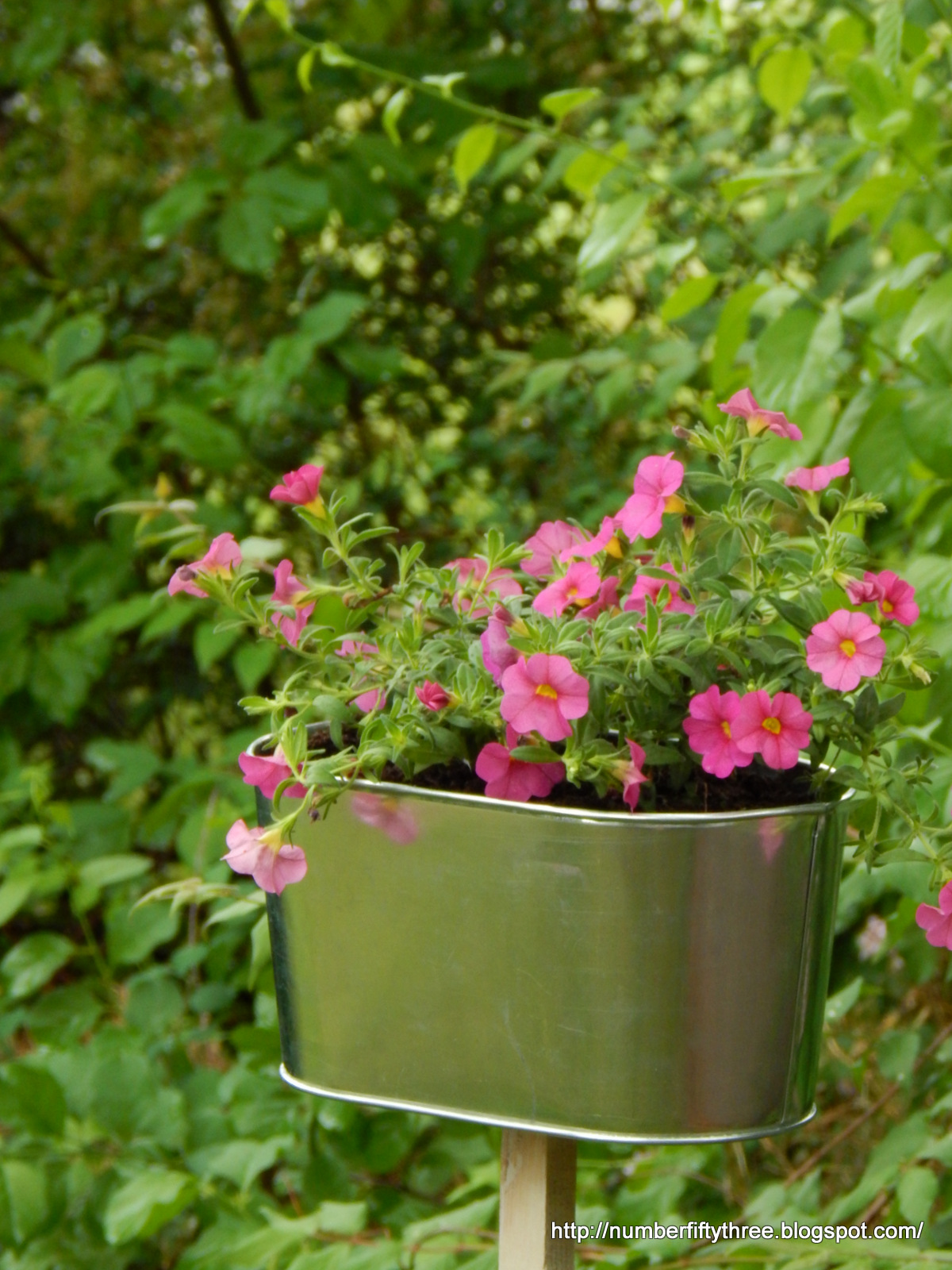 Add Accent Flowers With A Galvanized Planter Jennifer Rizzo