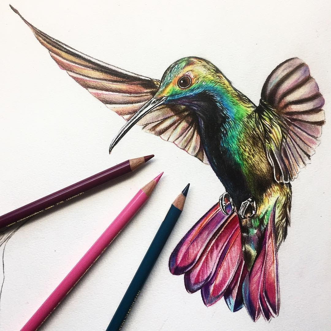 09-Hummingbird-Liam-James-Cross-Wild-Animals-Drawings-and-Paintings-www-designstack-co