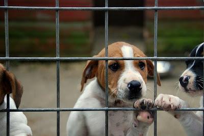 Cuidar un perro adoptado