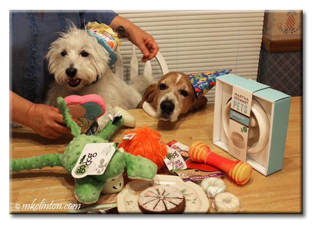 Basset and Westie look at new birthday toys.