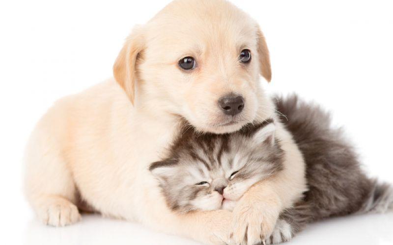 Animali pucciosi o coccolosi for Animali pucciosi