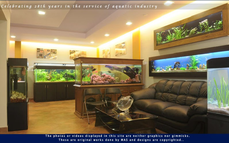 Aquarium suppliers in dubai: Are you searching for an Aquarium