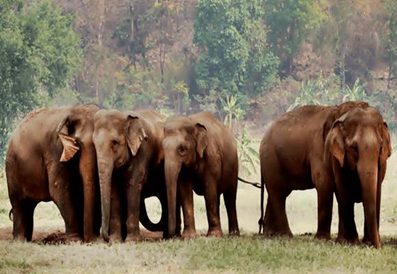 Elefantes-protegidos
